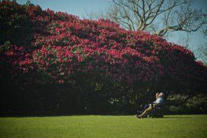 heligan gardens garden break