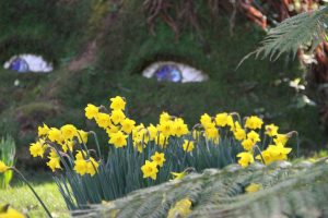 heligan gardens spring