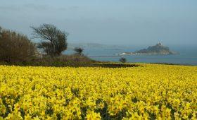 mounts bay spring flowers