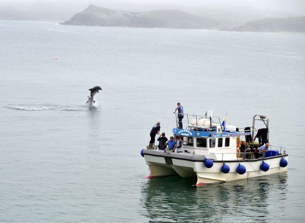 newquay sea safari and fishing